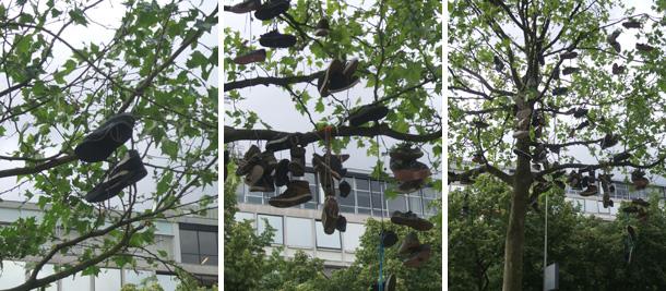 schoenenboom